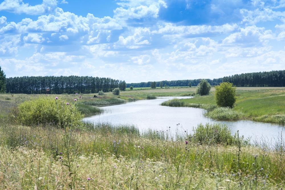 http://zelenovka-prud.ru/wp-content/uploads/2014/07/DSC_4476_1.jpg