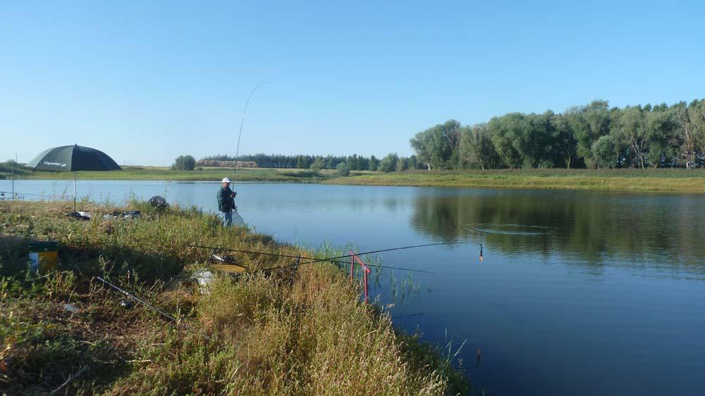 пруды воронежа и цены на рыбалку