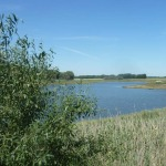 Зеленёвский пруд Воронежская область