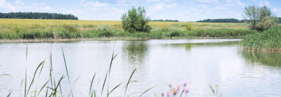Живописный пруд № 2 Воронежской области Аннинского района